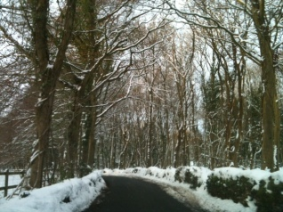 Randwick Woods2
