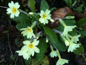 spring flower1